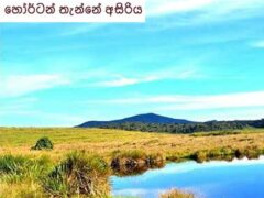 Amazing Horton Plains in Sri Lanka