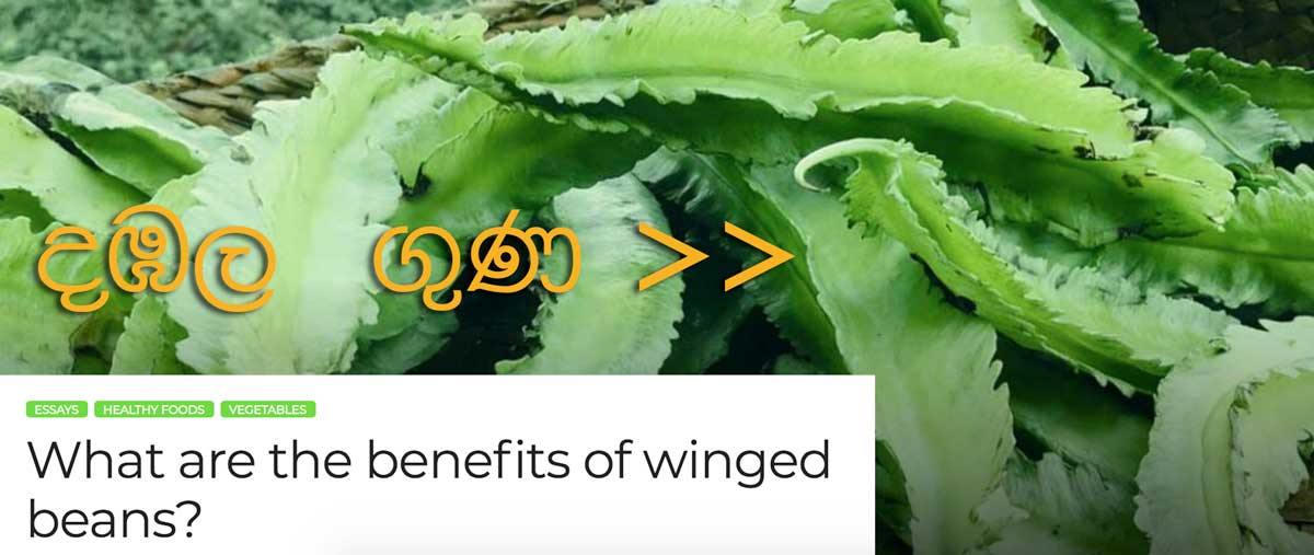 winged beans Essay